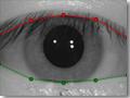 La separación de los párpados por VeriEye permite detectar los iris incluso cuando los ojos están parcialmente cubiertos por las tapas